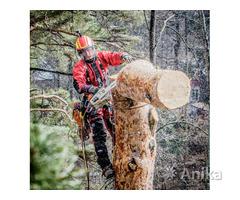 Вам нужно спилить дерево с помощью альпинистов?