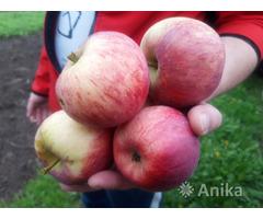Яблоко сладкое