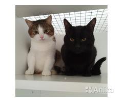 Гостиница для кошек  Минск