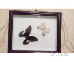 Панно в рамке Бабочки