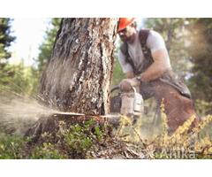 Спил деревьев, заборы, кровля, ремонт