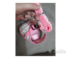 Шлейка-жилетка для маленьких собак